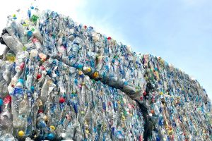 Bales of PET bottles for recycling.