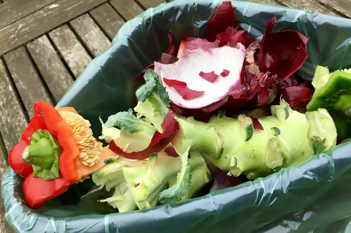 Food scraps collected in a bucket.